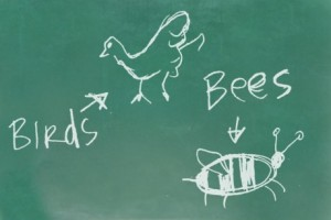 birds-and-bees